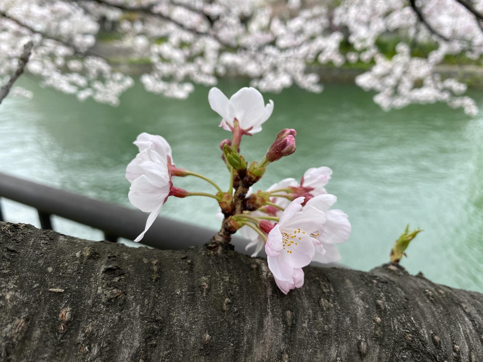 春は来る!