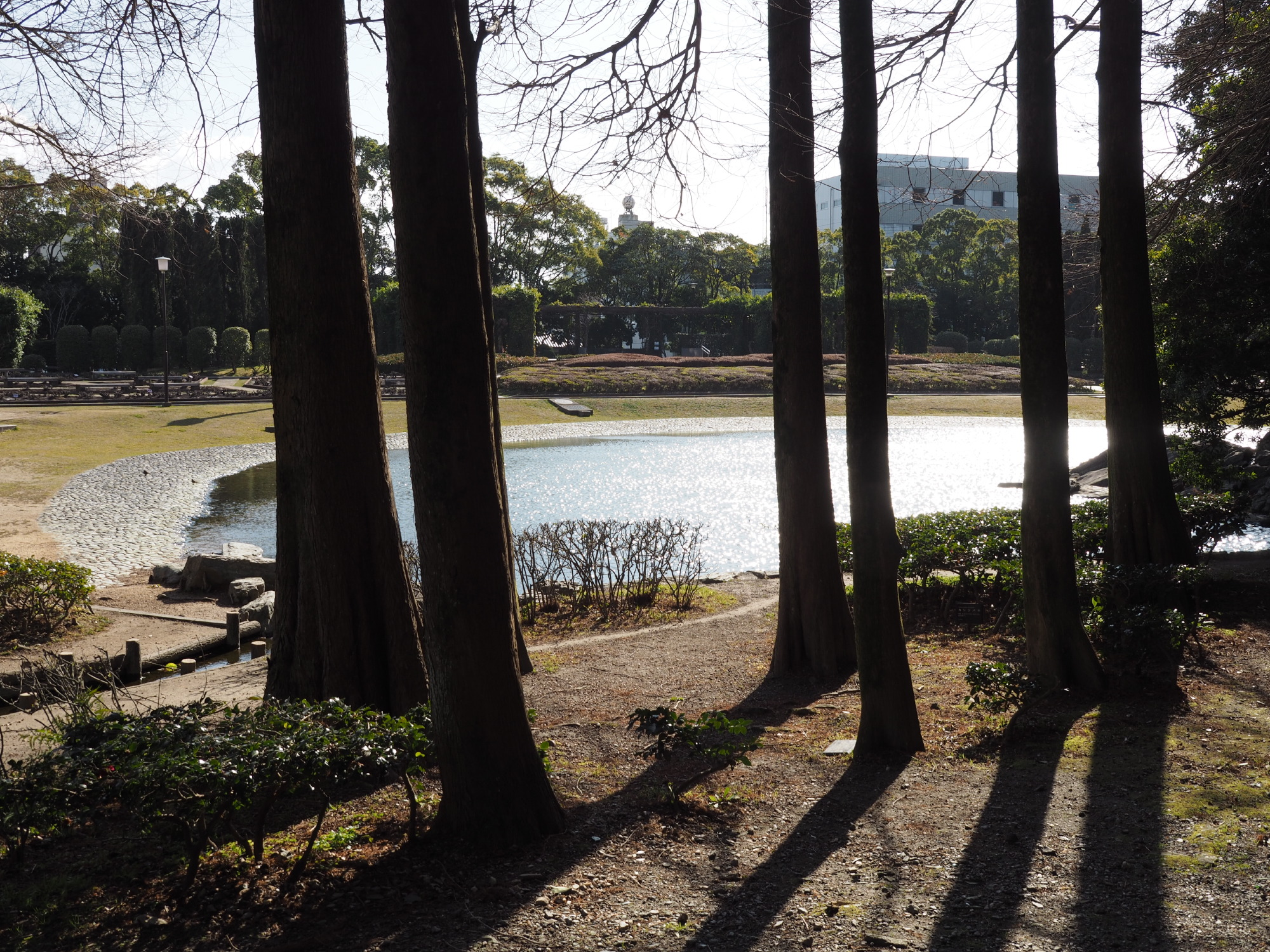 池@中央公園