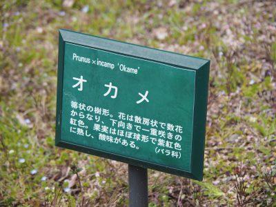説明板@植物園