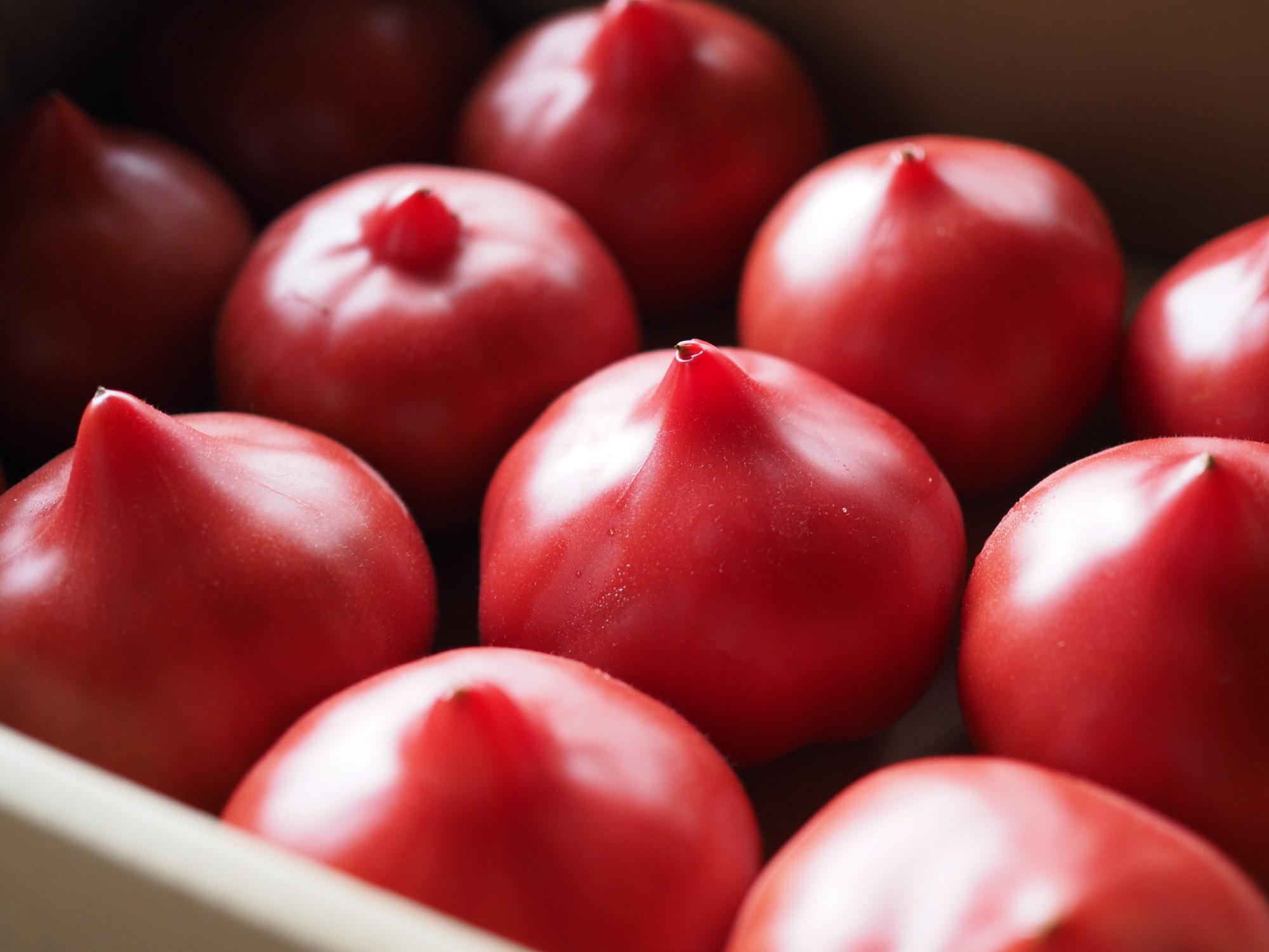 多治見のファーストトマト
