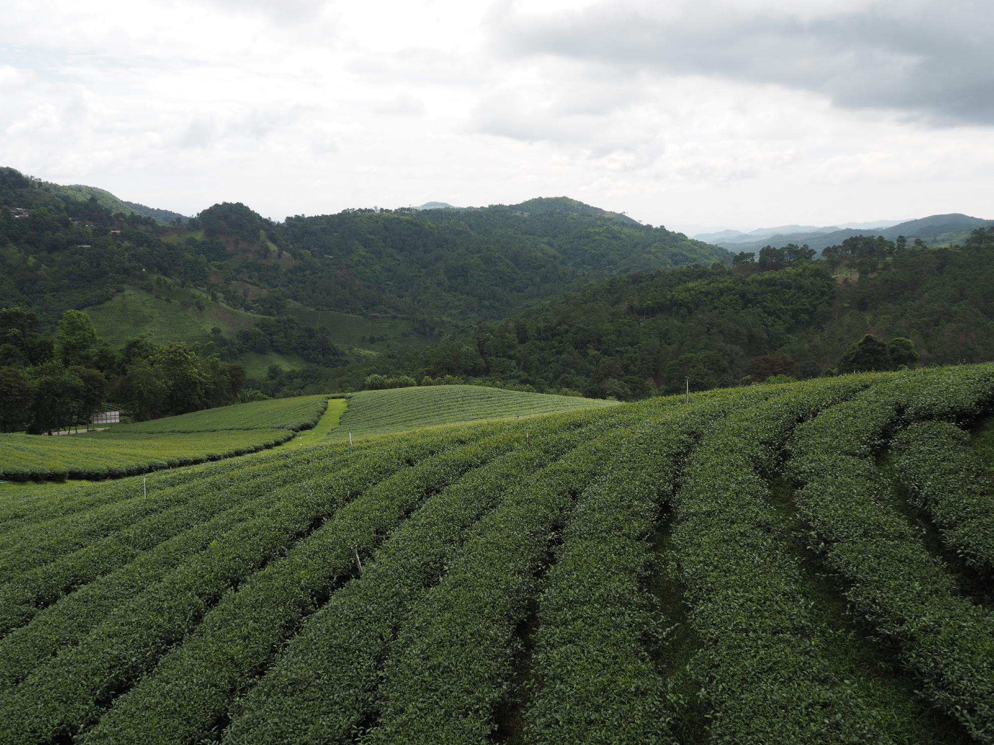 茶畑@ドイメーサロン1