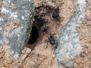 クロオオアリの巣(2015年7月12日)